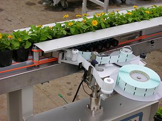 花苗鉢の側面にラベルを貼ります